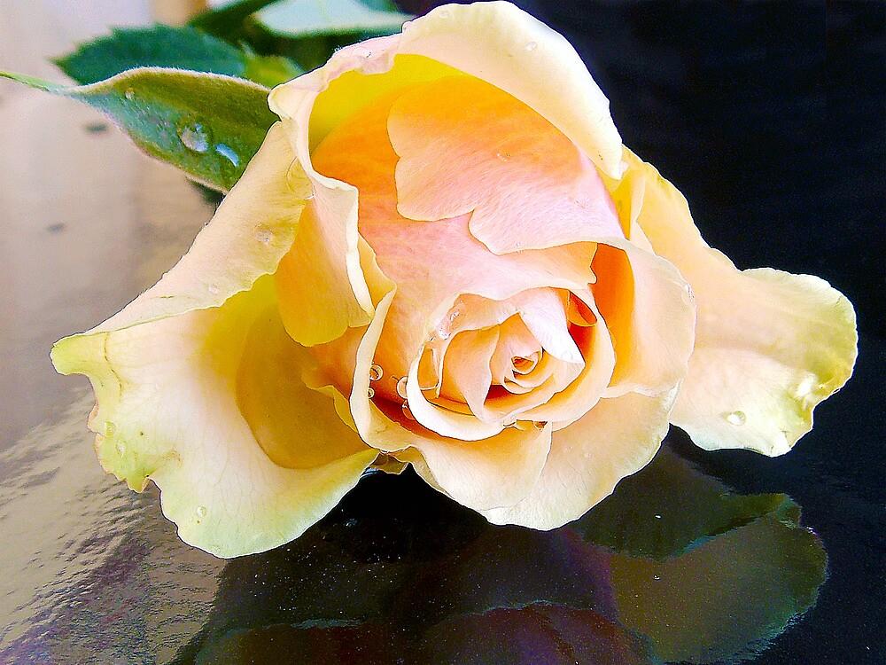 682-beauty rose by elvira1