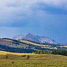 Yellowstone National Park by Maryna Gumenyuk