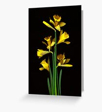 Daffodil / Jonquil ~ Narcissus Bouquet Greeting Card
