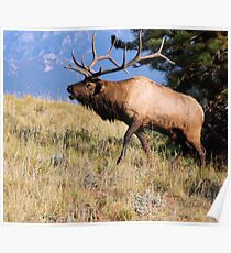 The Rut Poster