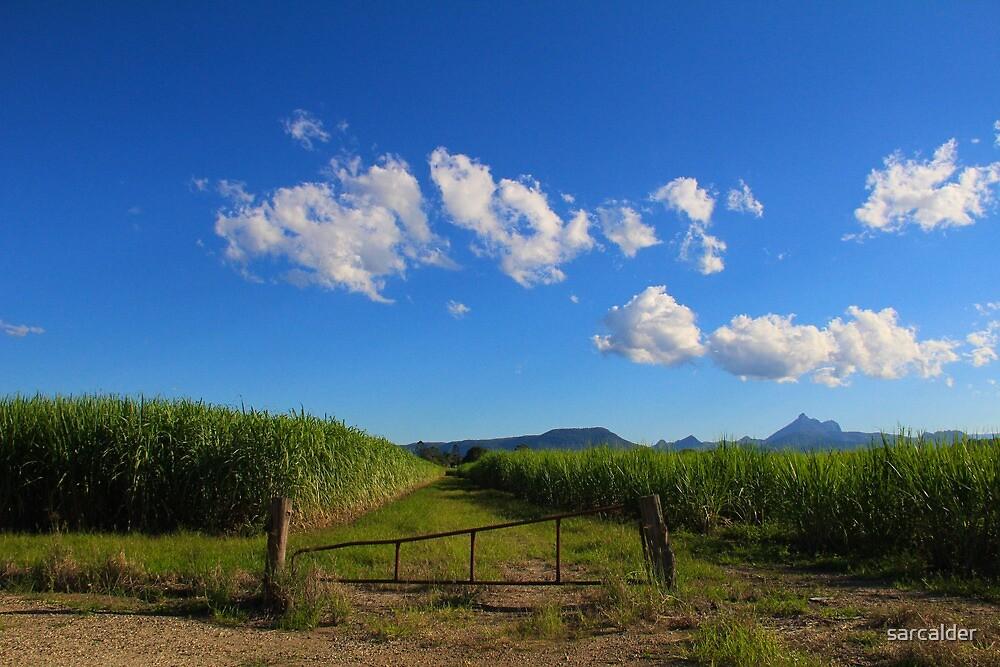 Cane fields  by sarcalder
