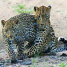 Animal affection! by Anthony Goldman