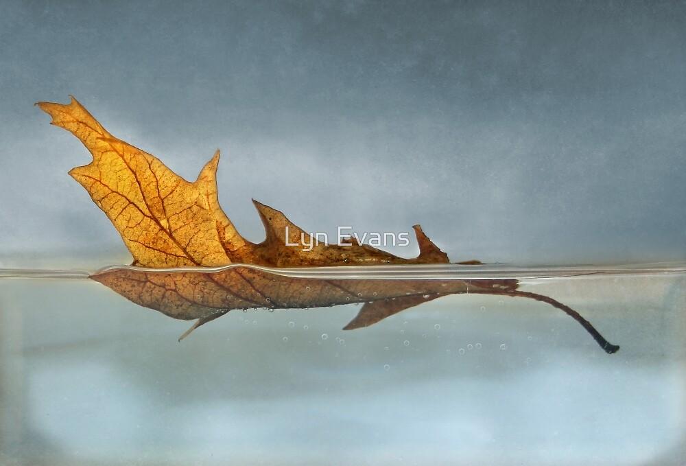 Afloat by Lyn Evans
