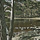 Loch an Eillen Aviemore by Doug Cook