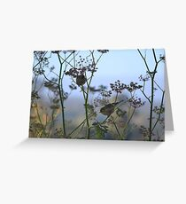 Two Silvereyes Feasting on Fennel Seeds Greeting Card