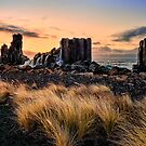 Grass and rock by Adriano Carrideo