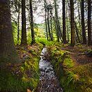 Scottish Woodland Stream by mlphoto