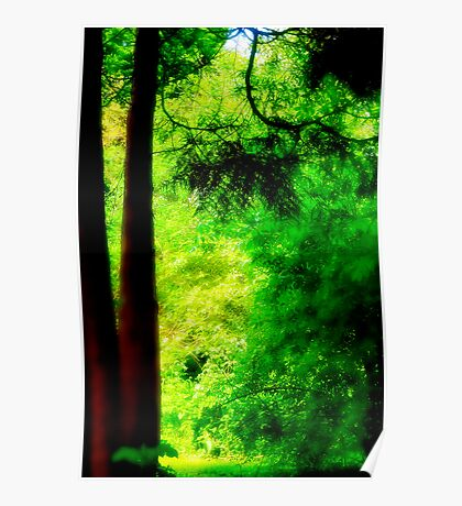 Trees and light Poster