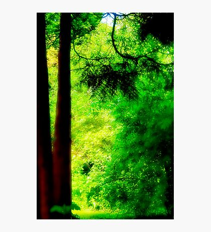 Trees and light Photographic Print