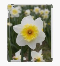 Single Daffodil  iPad Case/Skin