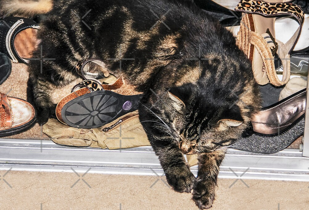 Asleep On My Shoes by Heather Friedman