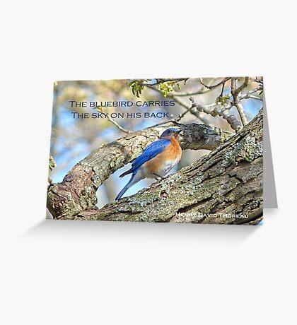 Bluebird Greeting Card Greeting Card