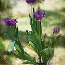 Glorious Spring by zzsuzsa