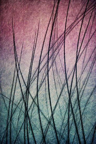 Feathered IV by Sharon Johnstone