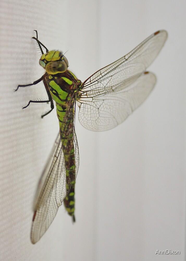 Dragon Fly by AnnDixon
