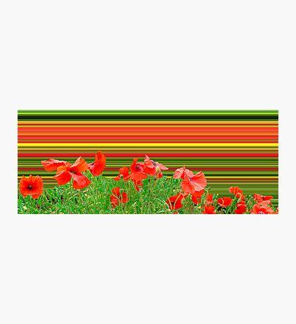 Poppy explosion Photographic Print