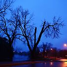 Rainy Springtime Trees At Dusk by farmbrough