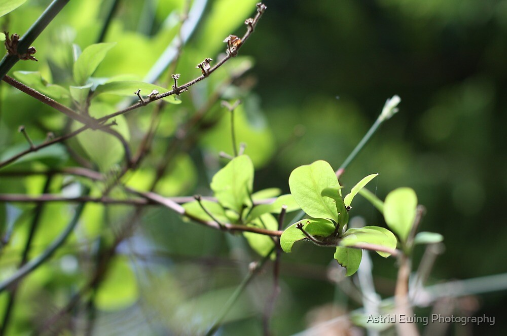 Spring Greens by Astrid Ewing Photography