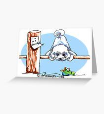 Bichon Frise Dock Dog Greeting Card
