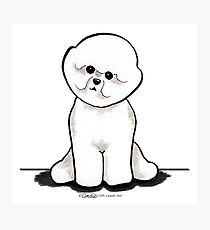 Bichon Frise Sit Pretty Photographic Print