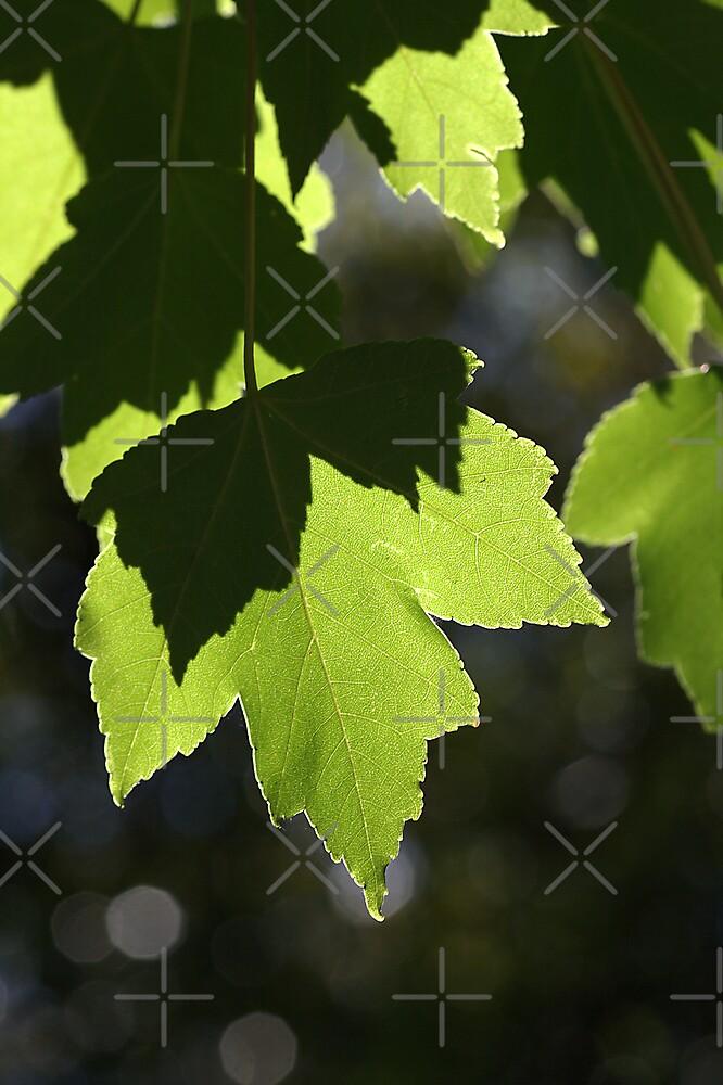 Leaves - Light - Dancing by Joy Watson