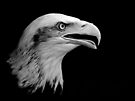 Bald Eagle (Liberty). by Alan Forder