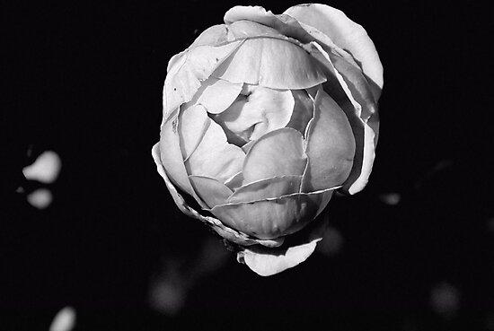 Roseball by Bob Wall