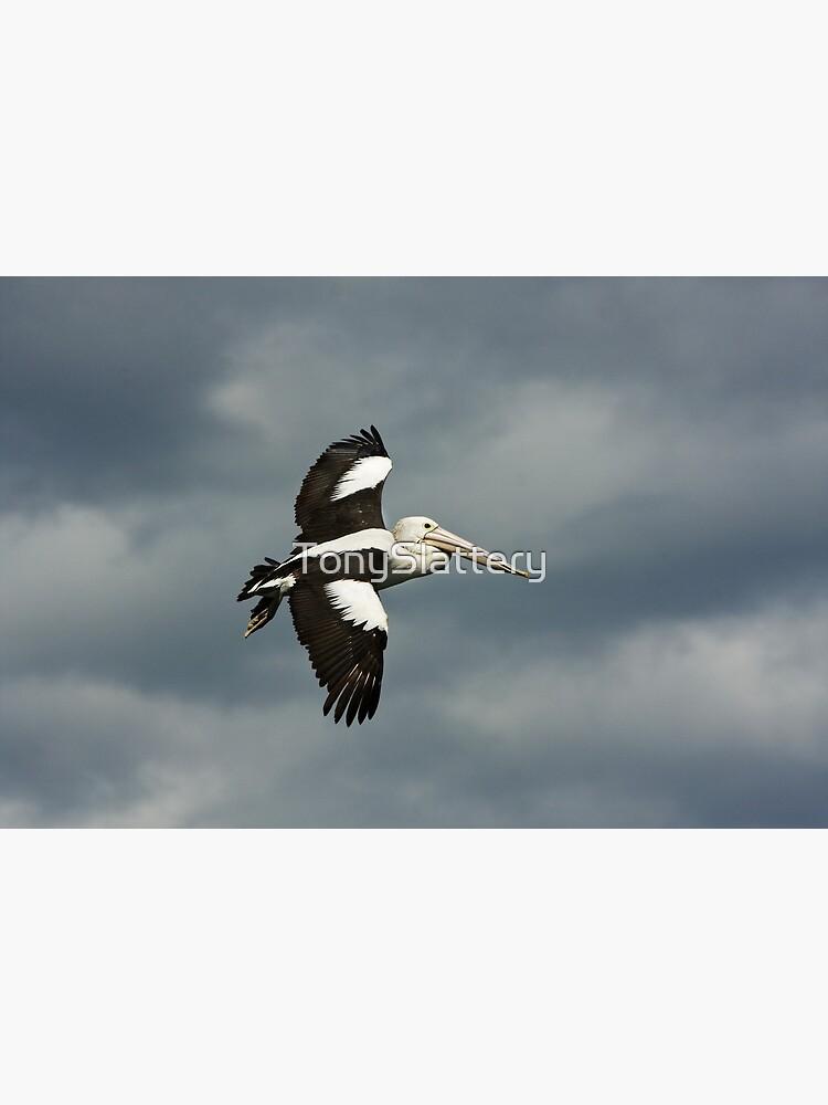 Flying Pelican by TonySlattery