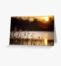 reeds in the sun Greeting Card