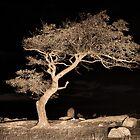 Lighting up at tree at Dock Rocks by Mick Kupresanin