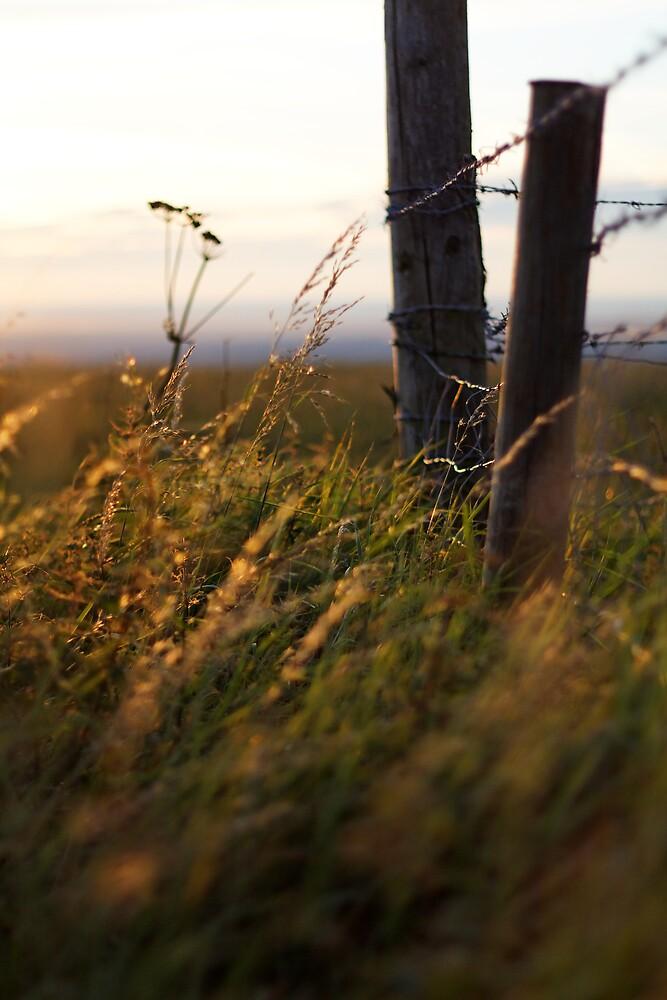 grass by James Calvey