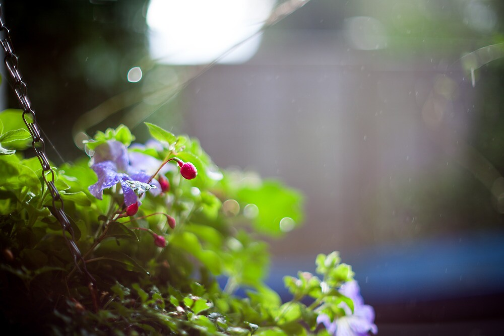 spring shower by James Calvey