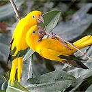Birds of a Feather by SandraWidner