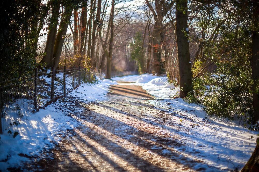 snowy path by James Calvey