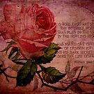 O Rose Thou Art Sick by Sarah Vernon
