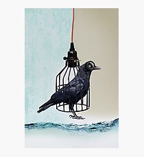 bird in the wire Photographic Print