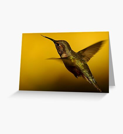 A HUMMINGBIRDS LIFE Greeting Card