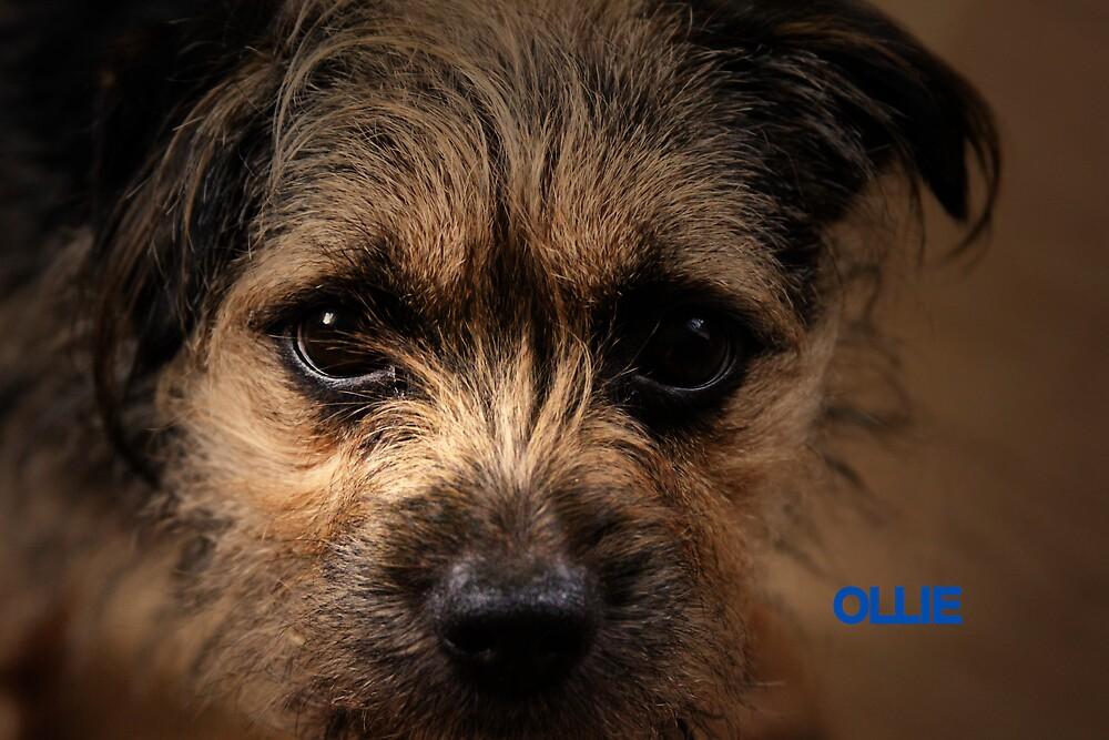 OLLIE by leonie7