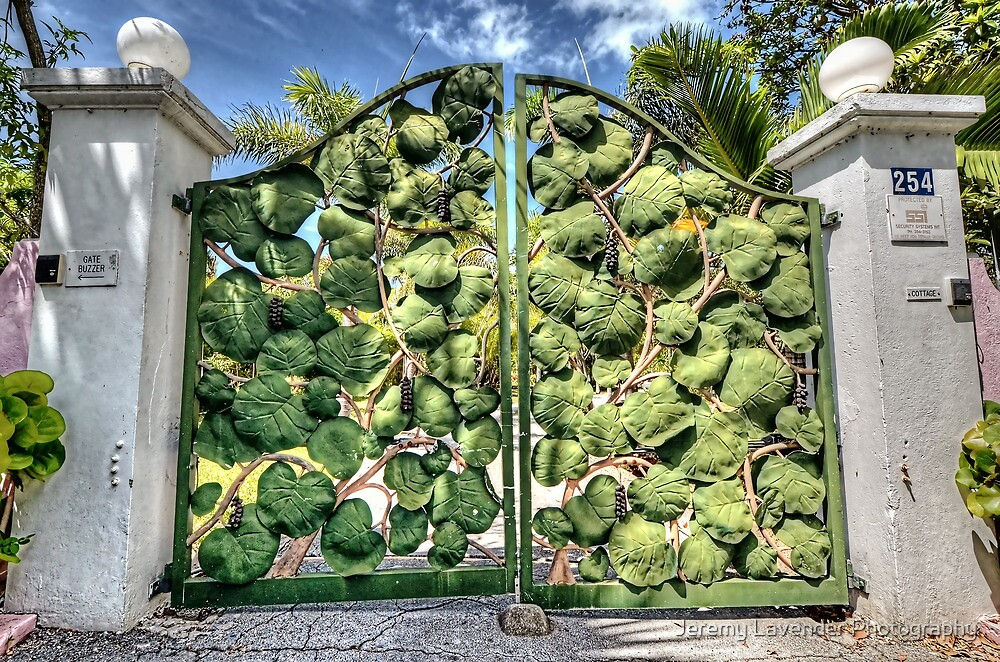 Sea grape at the front gate on Eastern Road in Nassau, The Bahamas by Jeremy Lavender Photography