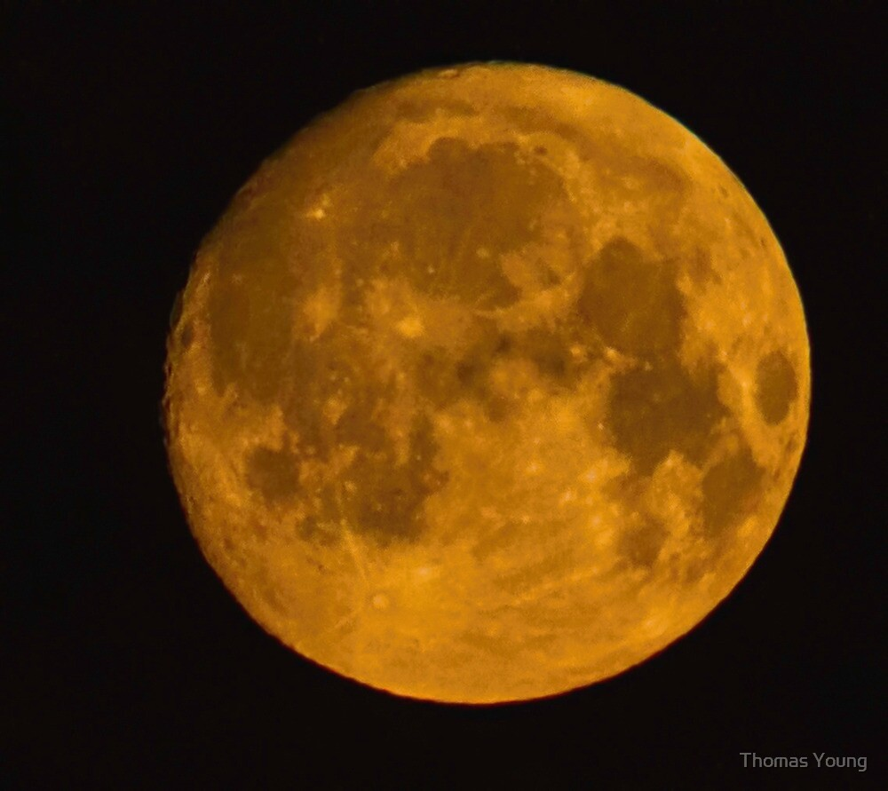 Pink Moon by Thomas Young