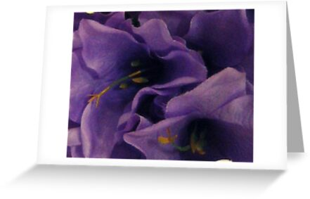 Lavender Lilies Closeup in Shadows by Jane Neill-Hancock