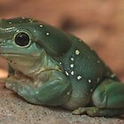 Green Tree Frog by v-something