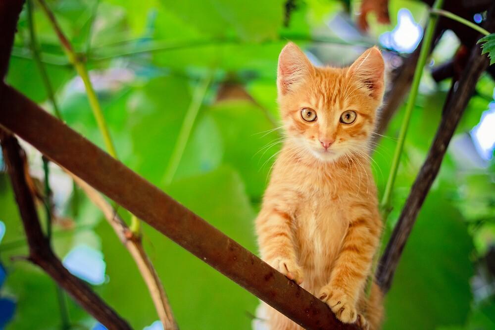 Young Kitten Sitting On Branch by GrishkaBruev