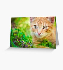 Young Kitten Is Hunting On Green Grass Greeting Card