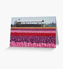 A Rainbow of Tulips Greeting Card