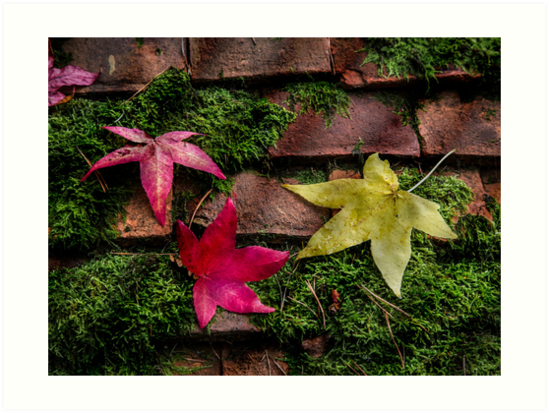 Autumn Leaves by Patricia Jacobs DPAGB LRPS BPE4