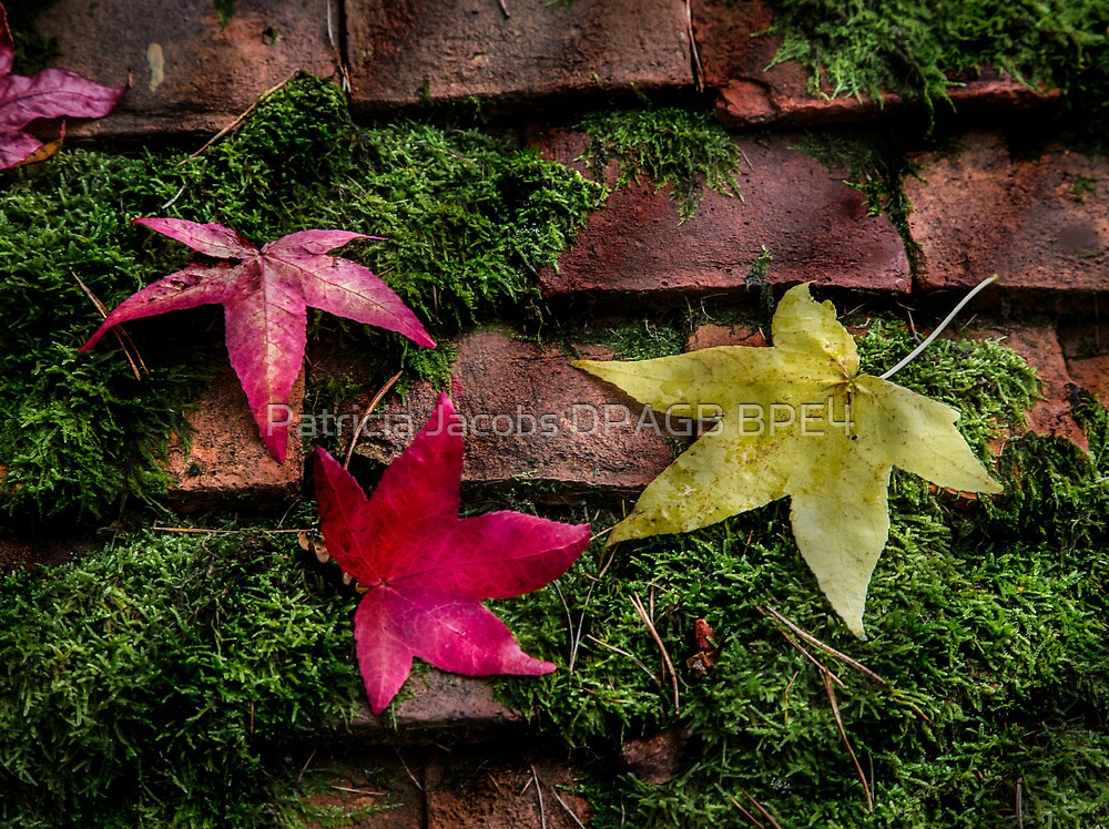 Autumn Leaves by Patricia Jacobs DPAGB BPE4