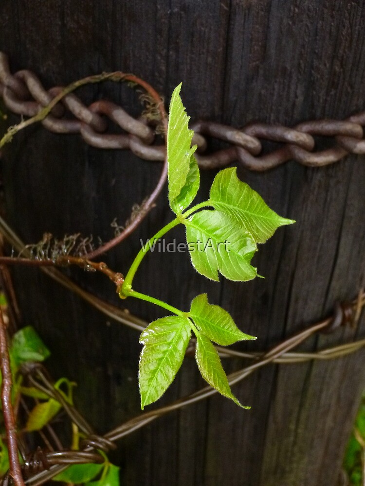 New Growth On The Old  Fence Post by WildestArt