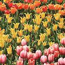 Tulip Garden by Gene Praag