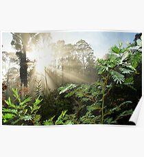 Sunbeams in the Bush  Tasmania Poster
